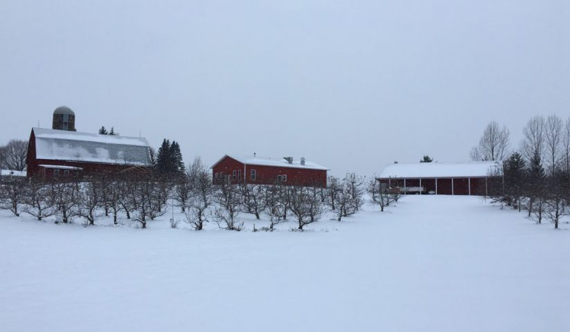 Winter Apple Orchard