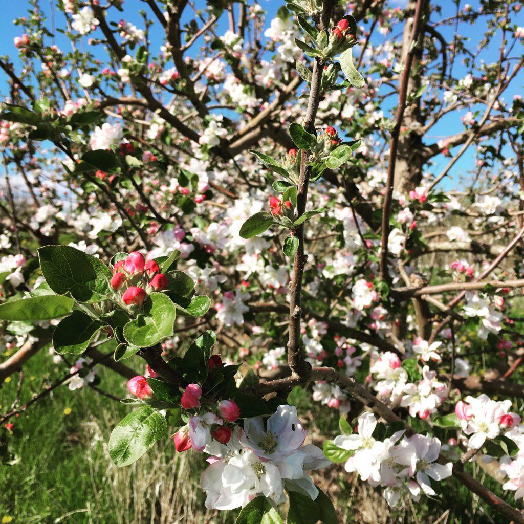 Bloom Walk 2019 – Canceled