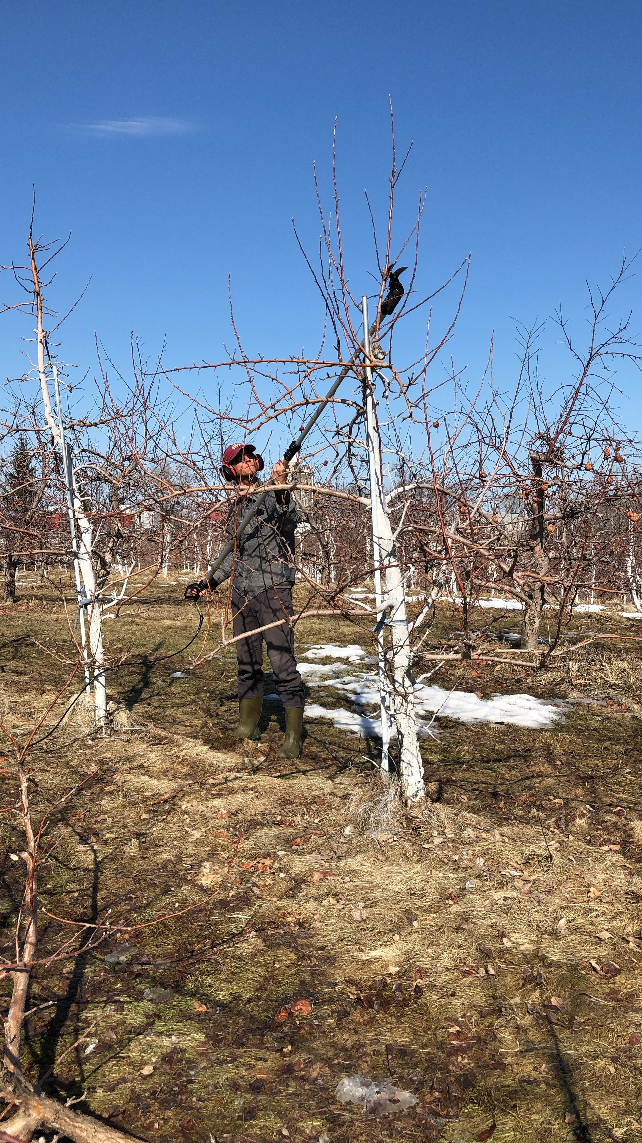 Pruning Our Way Into Spring